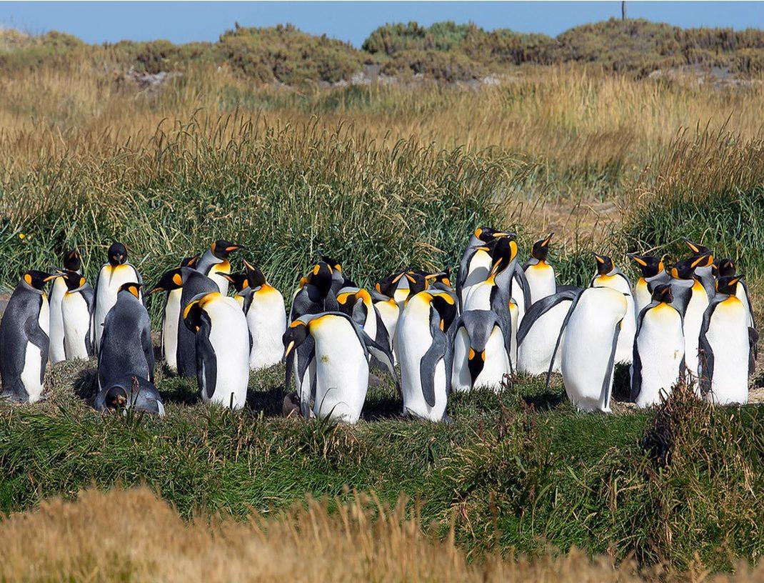 pinguinos2.1